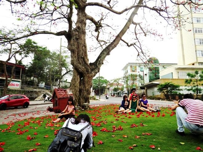 Algodonero rojo, princesa de las flores de ciudad portuaria de Hai Phong - ảnh 7