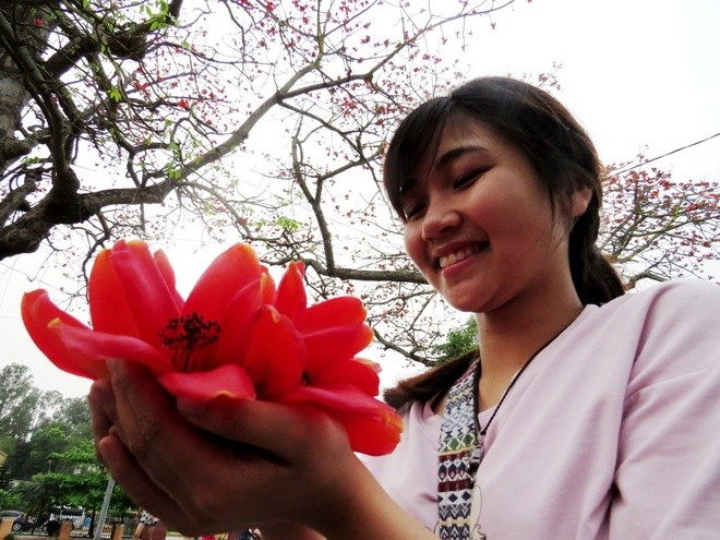 Algodonero rojo, princesa de las flores de ciudad portuaria de Hai Phong - ảnh 9