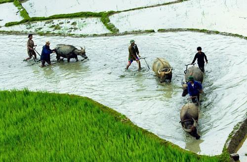 Preserva la etnia Ha Nhi oficios tradicionales - ảnh 1