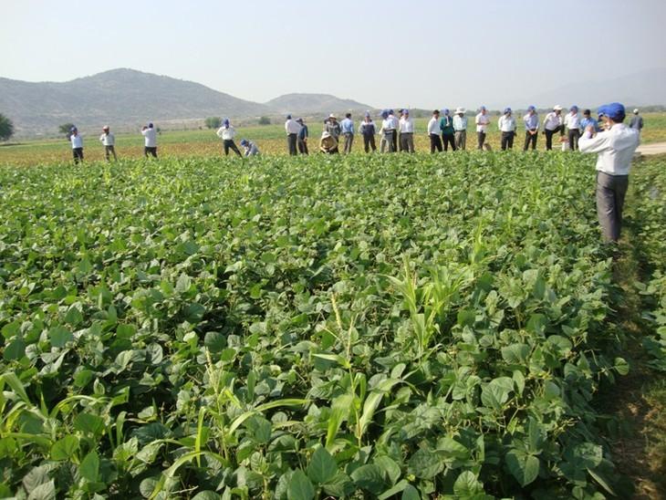 Provincia vietnamita cambia estructura de cultivo para adaptarse al cambio climático - ảnh 1