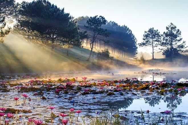 Đà Lạt, uno de los nueve destinos favoritos para descubrir en Asia  - ảnh 7