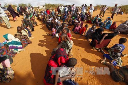 Cerrará Kenia el mayor campamento para refugiados en la frontera con Somalia - ảnh 1