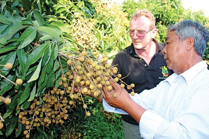 Agricultores de Dong Thap por exportar más - ảnh 1