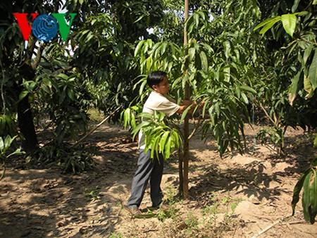 Dinh Cong Tam, un emprendedor que logró vencer la pobreza y progresar - ảnh 1