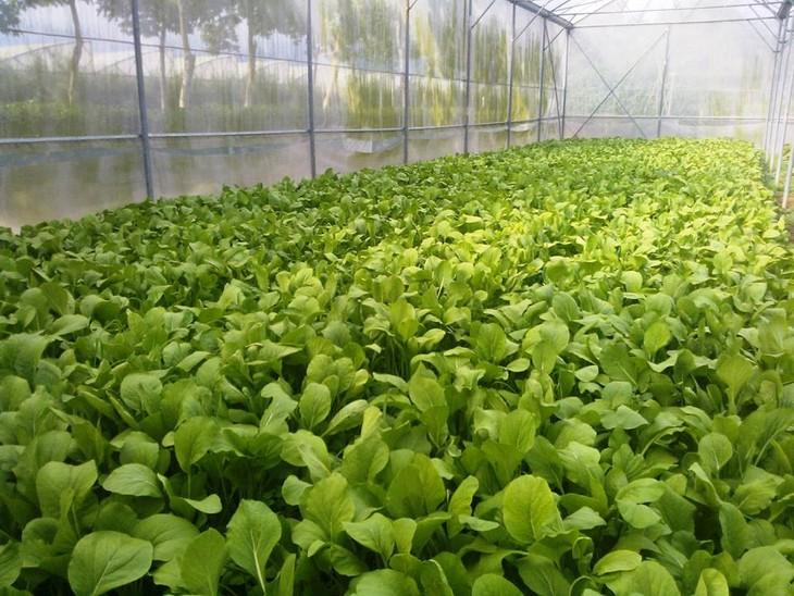 Agricultores de Ciudad Ho Chi Minh participan en innovación tecnológica  - ảnh 3
