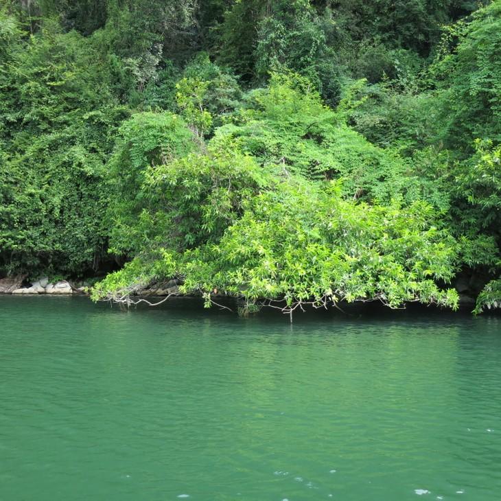 Belleza del lago de Ba Be - ảnh 6