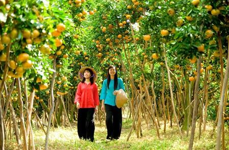 Lai Vung, el reino de las mandarinas - ảnh 3