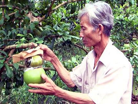 Una visita a la cuna de frutas singulares para el Tet vietnamita - ảnh 2