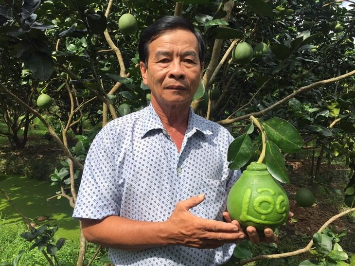 Una visita a la cuna de frutas singulares para el Tet vietnamita - ảnh 1
