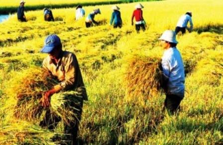 Agricultura en región del Delta del río Mekong ante retos de integración internacional - ảnh 1