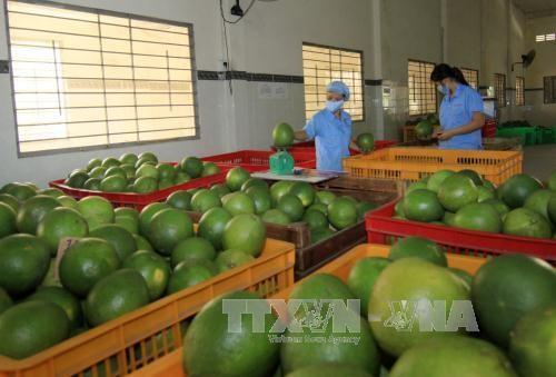 Aumenta superávit comercial de Vietnam con Canadá - ảnh 1