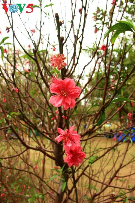 Flores primaverales alegran zona urbana ecológica - ảnh 15