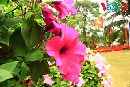 Flores primaverales alegran zona urbana ecológica - ảnh 16