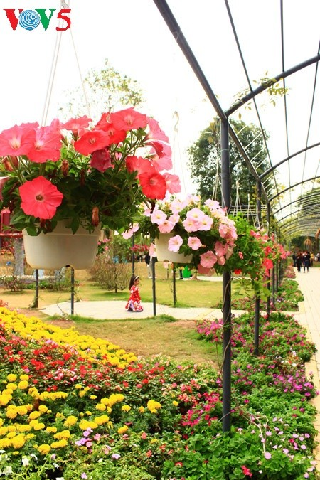 Flores primaverales alegran zona urbana ecológica - ảnh 4