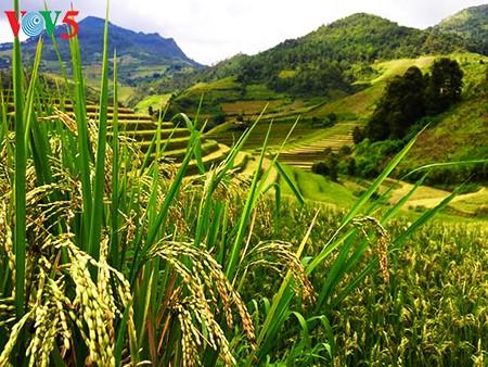 Terrazas de arroz en Mu Cang Chai, paisaje majestuoso del noroeste vietnamita - ảnh 1