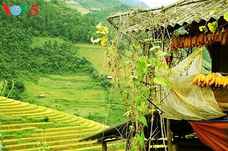 Terrazas de arroz en Mu Cang Chai, paisaje majestuoso del noroeste vietnamita - ảnh 2
