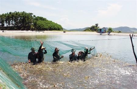 Sector acuícola vietnamita por elevar valor de exportaciones de camarón - ảnh 1