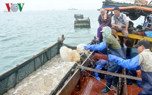 Distrito insular de Co To adelanta la pesca de medusas - ảnh 1