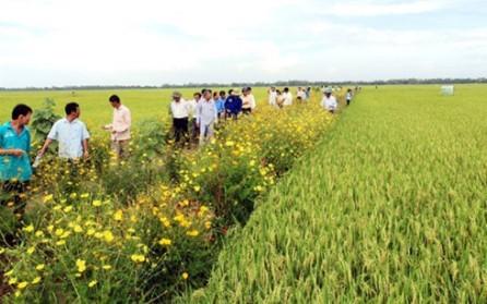Cultivo de flores a lo largo de los bordes de los campos ayuda a promover la agricultura sostenible - ảnh 1