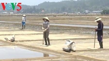 Desa pegaraman Sa Huynh, propinsi Quang Ngai - ảnh 2