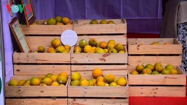 Pembukaan Pekan raya pertama hasil pertanian, kerajinan tangan industri kecil Vietnam - ảnh 7