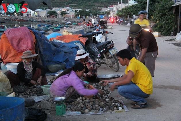 Kehidupan sehari hari di kabupaten pulau Ly Son - ảnh 18