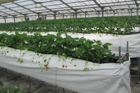 Kota Ho Chi Minh dan propinsi Hokkaido, Jepang memperkuat kerjasama di bidang pertanian,perikanan - ảnh 1
