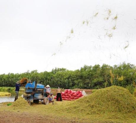 Kota Can Tho bekerjasama dengan badan-badan usaha Australia memperkuat kemampuan ekspor beras - ảnh 1