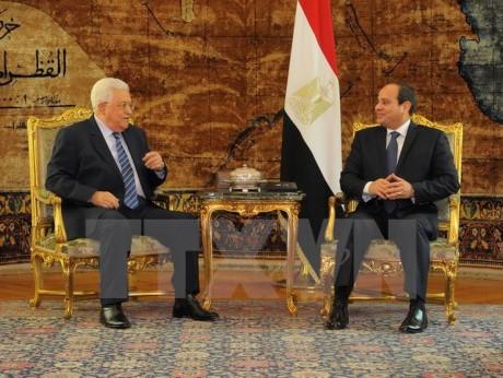 Египет и Палестина обсудили процесс перемирия на Ближнем Востоке - ảnh 1