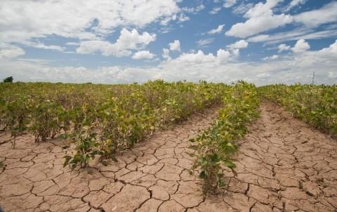 越南农业:明确挑战促增长 - ảnh 1