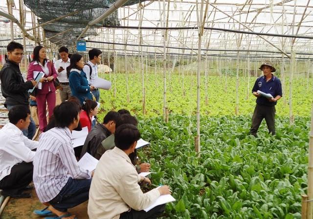 越南农业:明确挑战促增长 - ảnh 2