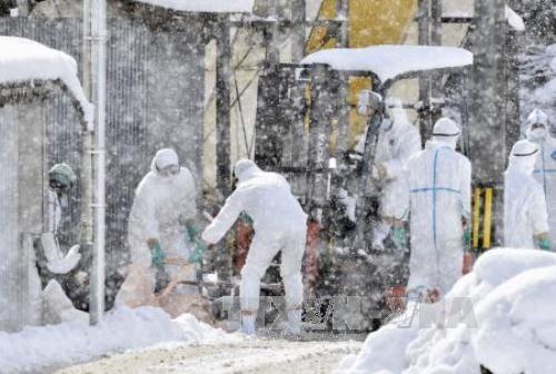 中国加强对H7N9禽流感疫情爆发的防控工作 - ảnh 1