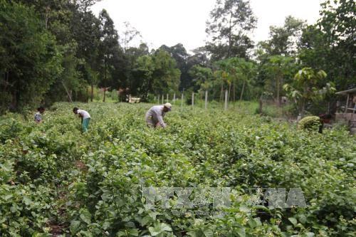 越南发布面向可持续发展的国家行动计划 - ảnh 1