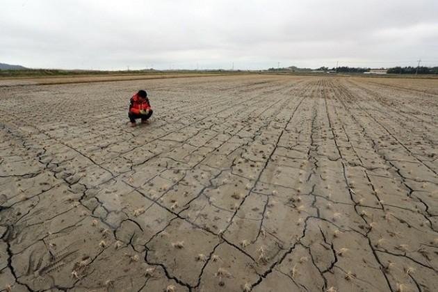 世界各国市长呼吁20国集团承诺应对气候变化 - ảnh 1