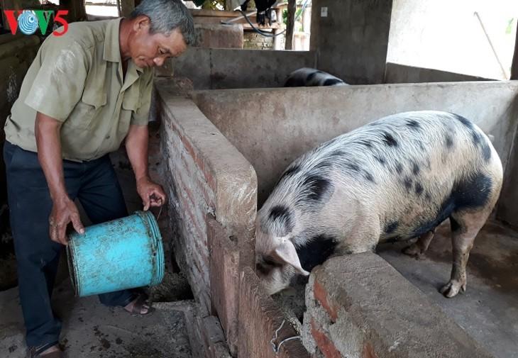 Me Van Chinh develops household economy from husbandry - ảnh 1