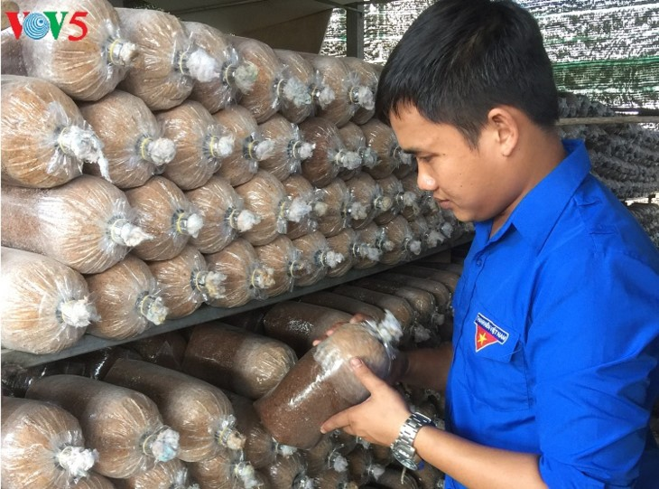 Young man profits from mushroom farming - ảnh 1