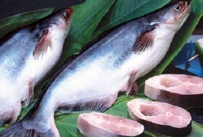 นโยบายการคุ้มครองการเกษตรของสหรัฐสร้างความเดือดร้อนให้แก่การส่งออกปลาสวายของเวียดนาม  - ảnh 1