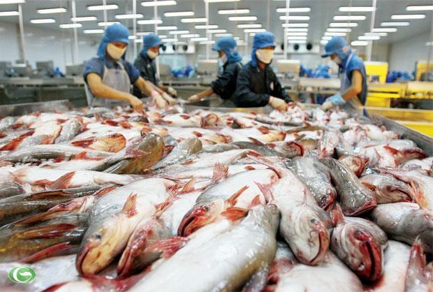 นโยบายการคุ้มครองการเกษตรของสหรัฐสร้างความเดือดร้อนให้แก่การส่งออกปลาสวายของเวียดนาม  - ảnh 2