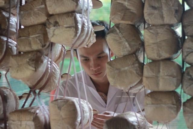 โงกิมลาย ผู้ที่ประสบความสำเร็จในการเพาะพันธุ์ถั่งเช่าในเวียดนาม - ảnh 1