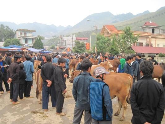 การเลี้ยงวัวเชิงพาณิชย์ในเขตที่รายสูงหินห่ายาง - ảnh 1