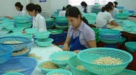 เวียดนามรั้งอันดับ๑ในโลกในด้านการส่งออกเม็ดมะม่วงหิมพานต์เป็นปีที่๘ - ảnh 1