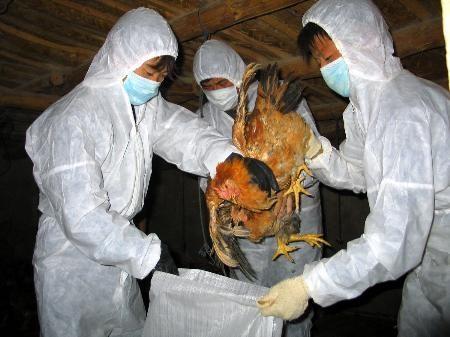 เวียดนามเน้นรับมือกับโรคไข้หวัดนก - ảnh 1
