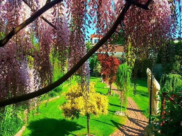 Vườn hoa tuyệt đẹp của người Việt tại Praha - ảnh 11