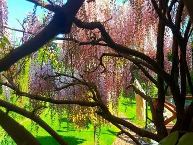 Vườn hoa tuyệt đẹp của người Việt tại Praha - ảnh 1