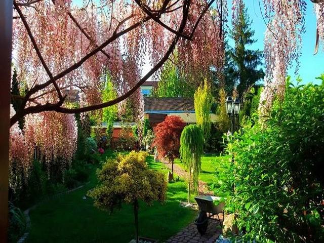 Vườn hoa tuyệt đẹp của người Việt tại Praha - ảnh 2