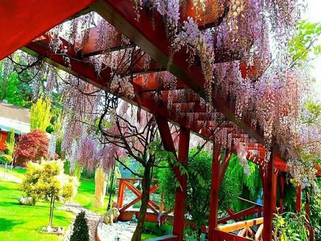 Vườn hoa tuyệt đẹp của người Việt tại Praha - ảnh 7