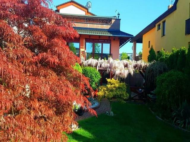 Vườn hoa tuyệt đẹp của người Việt tại Praha - ảnh 8