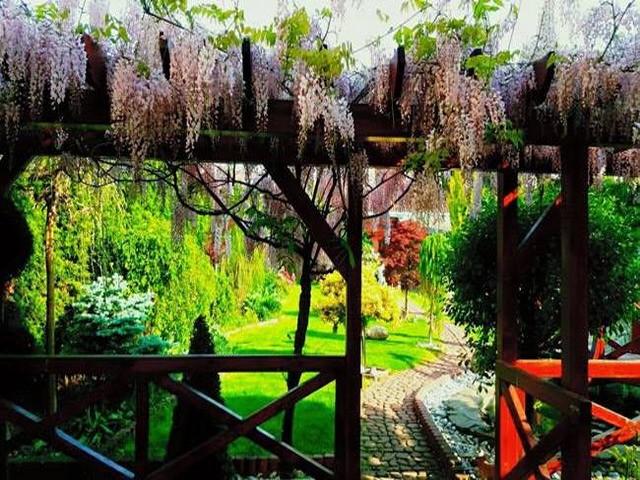 Vườn hoa tuyệt đẹp của người Việt tại Praha - ảnh 9