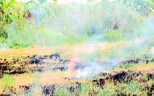 Nâng cao hiệu quả kinh tế và giảm phát khí thải nhà kính trong sản xuất lúa - ảnh 1