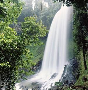 ไปเที่ยวน้ำตกที่สวยงามของดาลัตกันเถอะ - ảnh 1